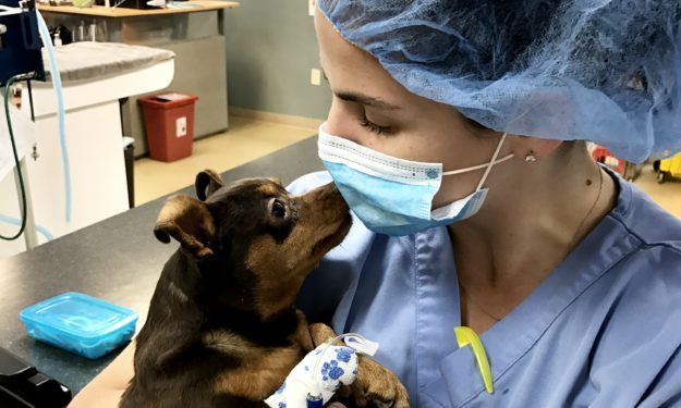 veterinary technician carrying patient in hospital