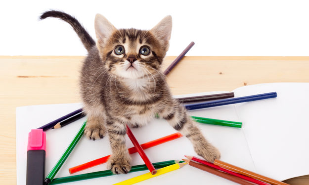 kitten playing with colored pencils on a desk